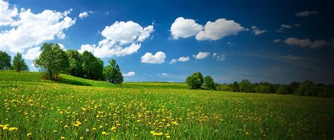Environmental Land Management Schemes (ELMS) - what might ...