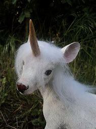 Best Baby Unicorn