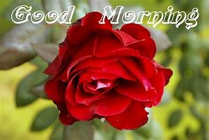 Good Morning Nature Wishes Pics, Photos, Wallpaper ...