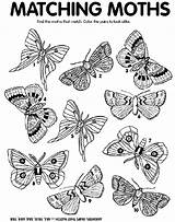 Moth Coloring Crayola Match Moths Printable Matching Colors Crayon Craft Preschool Thanksgiving Worksheets Butterfly Adults sketch template