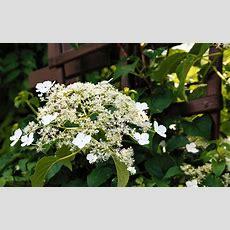 Best Plants For Shade  David Domoney