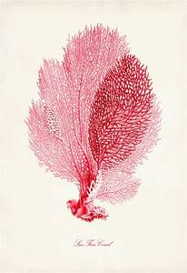 Coral Pink Sea Fan Coral Print, Poster of Pink Coral ...
