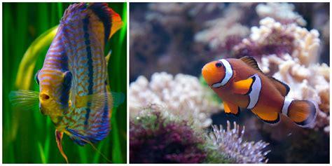 anniversaire aquarium de 28 images anniversaire aquarium pirate 3 aquarium de vannes