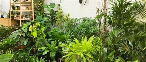 Indoor Plants Sale