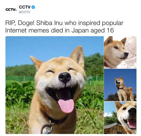 Meme Shiba Inu - doge rip doge know your meme