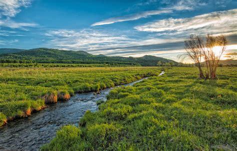 green grass fields  stock photo