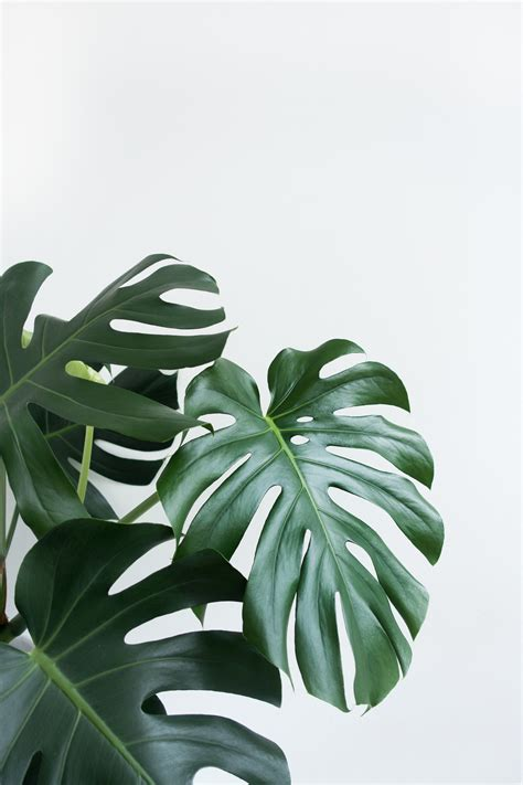 the health benefits of houseplants a considered