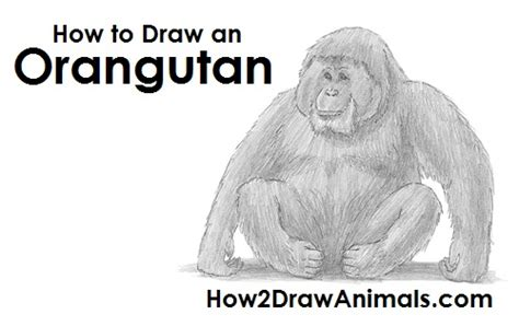 How To Draw A Realistic Ape