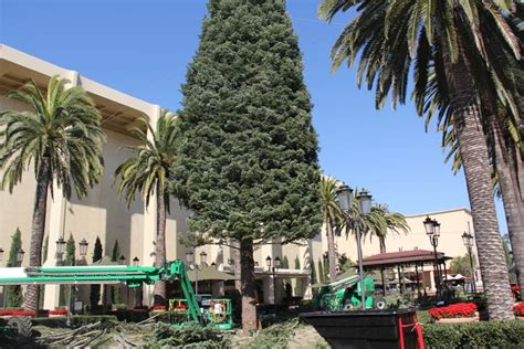 christmas light up in fashion island fashion island tree arrives in newport newport ca real estate homes