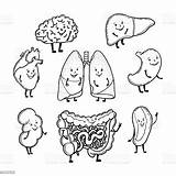 Organs Human Funny Smiling Drawing Vector Faces Cartoon Brain System Outlined Digestive Kidney Liver Heart Stomach Illustration Lungs Intestine Organ sketch template