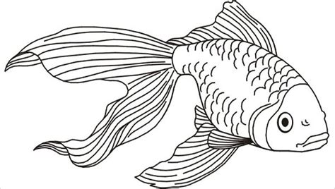 fish coloring pages jpg ai illustrator