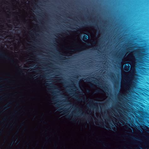 wild panda  behance