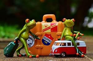 Frosch Bilder Lustig : kostenloses foto frosch reisen urlaub spa kostenloses bild auf pixabay 991310 ~ Whattoseeinmadrid.com Haus und Dekorationen