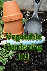 44 Best Images About My Vegetable Garden On Pinterest