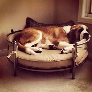 saint bernard amazing dog bed pet items pinterest With amazing dog beds