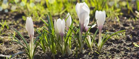 Der Garten Im Februar by Der Garten Im Februar Home Ideen