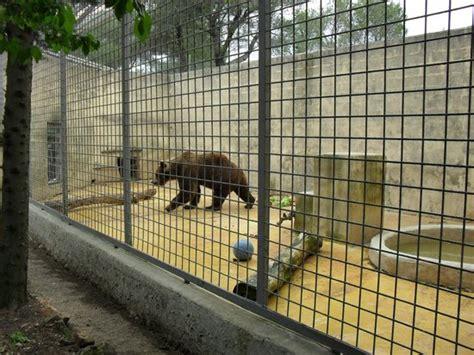la libert 233 d un ours picture of zoo fauverie du faron toulon tripadvisor