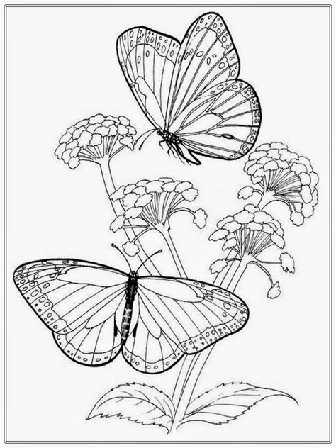 From caterpillar to butterfly, these free butterfly coloring sheets are fantastic for preschool students. Adult Coloring Pages Butterfly   Realistic Coloring Pages