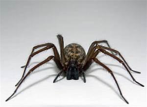 HD Cute Spider Wallpaper
