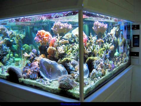 aquarium d ottrott les naades aquarium eau de mer 250 litres