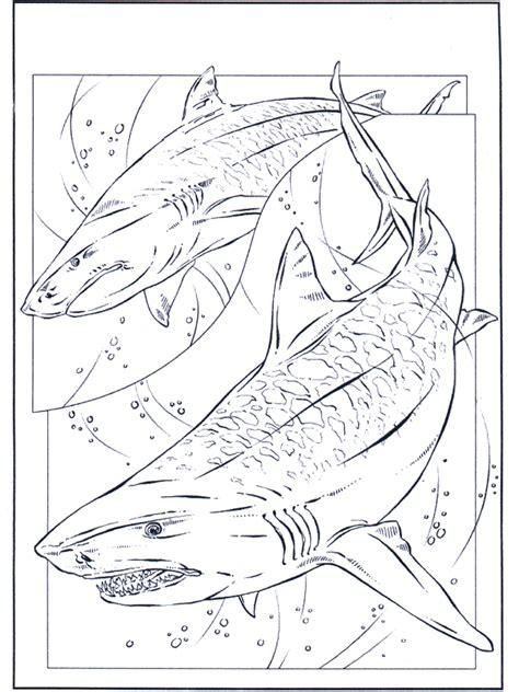 tubarao animais aquaticos