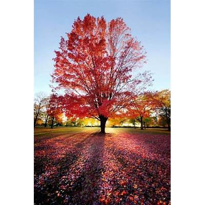 BEAUTIFUL TREES AND FLOWERS PICTURESAutumn Colors