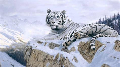 La Belleza De Los Tigres Blancos