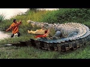 World's Biggest Crocodiles   Wıld Giant Crocodile Caught ...