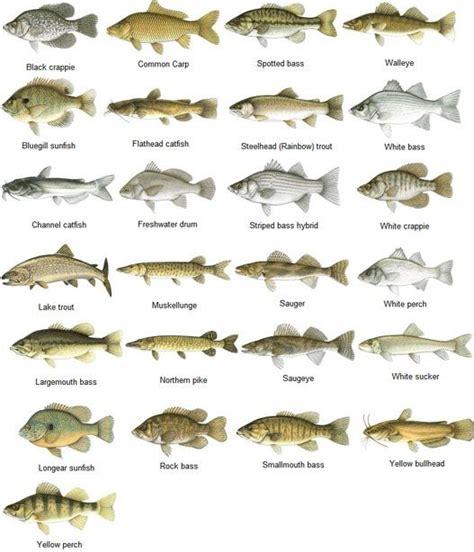 fishing ho images  pinterest fishing