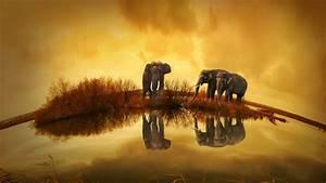 Thailand, Elephants, Wallpapers