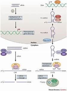 RNA interference. Causes, symptoms, treatment RNA interference