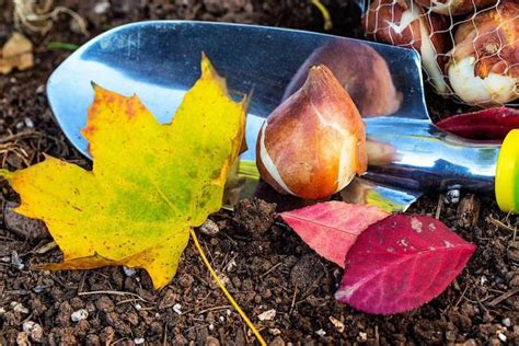 Herbst Gartenarbeit by Gartenarbeit Im Herbst To Do Liste N 252 Tzliche Tipps F 252 R