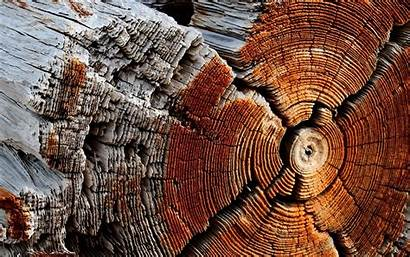 Texture Wood Wooden Nature Trees Circle Backgrounds