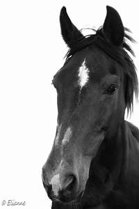 Horse Black and White by Eliannne on DeviantArt