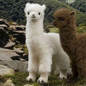 17 Best images about Camelids: Alpaca + Lama + Vincuna ...