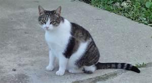 Welche Pflanzen Sind Nicht Giftig Für Katzen : was ist f r katzen giftig fello ~ Eleganceandgraceweddings.com Haus und Dekorationen