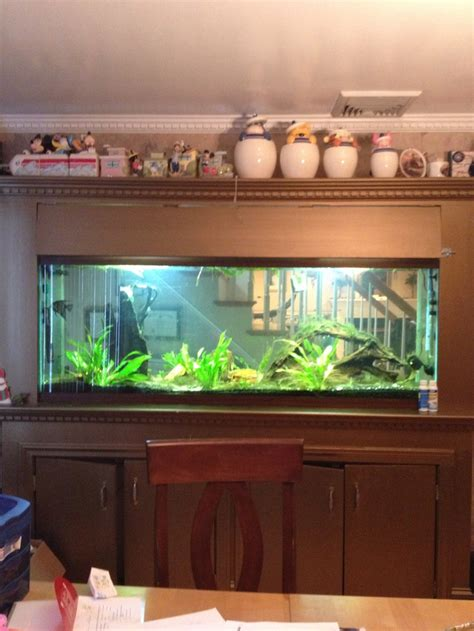25 best ideas about 150 gallon fish tank on pretty fish tropical fish and marine fish