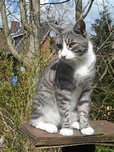 Weißer Wurm Katze : bild wirbelwind sunny jpg warrior cats fantasy wikia fandom powered by wikia ~ Markanthonyermac.com Haus und Dekorationen