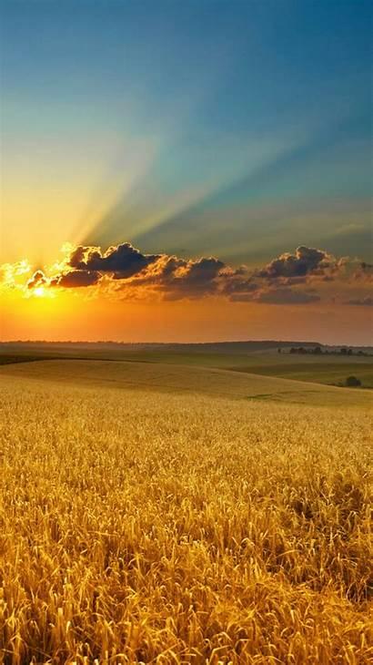 Iphone Nature Wallpapers Sunset Summer Field Golden