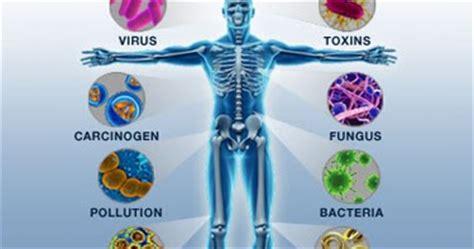 art  human body sistem imun