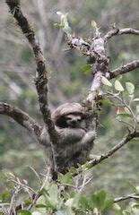 Sloth Ecosystem
