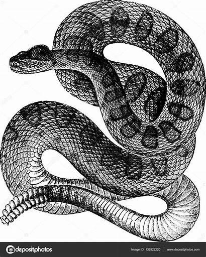 Snake Unorobus Gmail Depositphotos