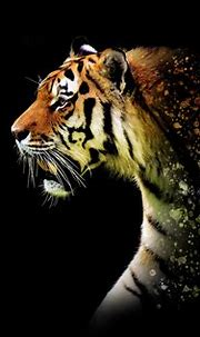 Tiger Abstract 5k, HD Animals, 4k Wallpapers, Images ...