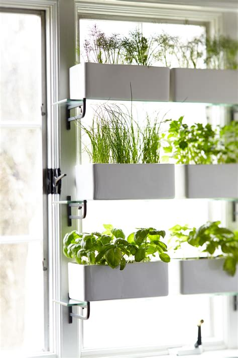Kitchen Window Plants by Pin By Is Xoes On Kitchen Trends In 2019 Kitchen
