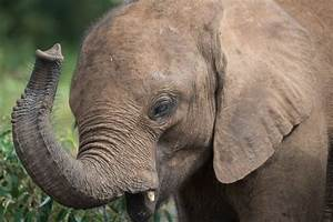 Scaling up the War on Elephant Poaching | HuffPost