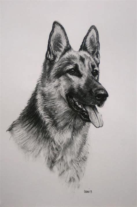 image result  pastor aleman dibujo  lapiz perros