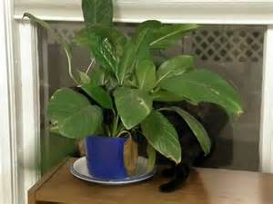 toxic plants for cats discover and save creative ideas