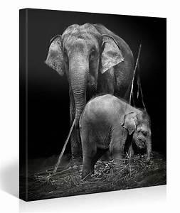 Schwarz Weiß Bilder Tiere : elefanten schwarz weiss 1004145 ~ Markanthonyermac.com Haus und Dekorationen