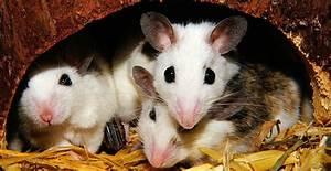 Können Mäuse Klettern : m usehaltung tierrechtsorganisation einhorn e v ~ Markanthonyermac.com Haus und Dekorationen