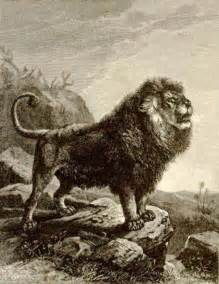 Barbary Lion Extinct Animals